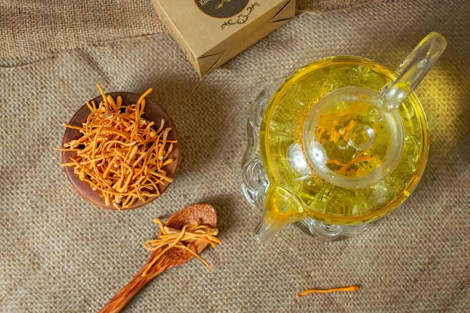 Đông Trùng Hạ Thảo dùng pha trà